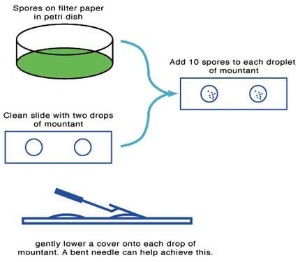 Diagram of slide preparation